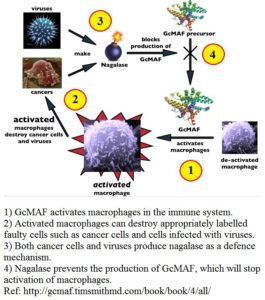 gcmaf-cycle-2