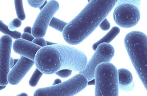 probiotics heal intestinal diseases