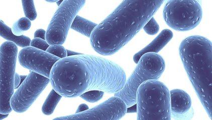 Can Probiotics Slow Down the Progress of HIV/AIDS?
