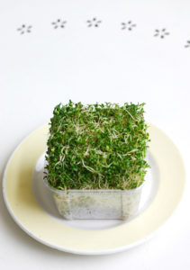 Buy broccoli sprouts cancer hates from Living Technologies.