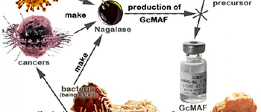 GcMAF Cancer Cure Will Save Your Life and a Fortune
